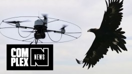 Cops Training Eagles to Take Down Drones