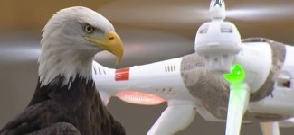 Tomorrow Daily – Drone-snatching eagles ready to stop illegal flights, Ep. 307